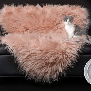 kitten on a pink rug on a couch