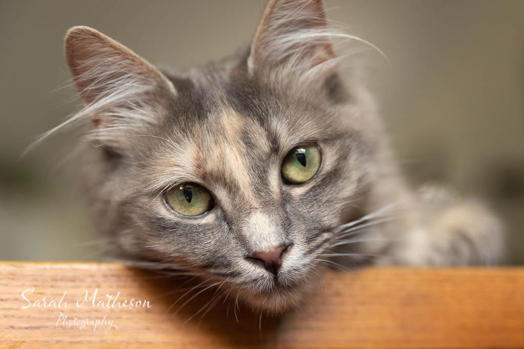 Amelia the cat